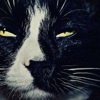 кот по имени кокс. :: Александра Негодаева
