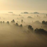 Туманное утро :: Андрей Вигерчук