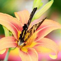 Цветок и бабочка :: Ольга Давыдова