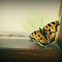 бабочка :: Александра Негодаева