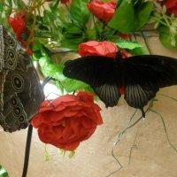 выставка бабочек :: Валерия Яскович