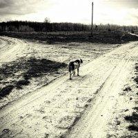 loneliness ... :: Роман Шершнев