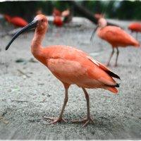 в парке птиц выделение цветом / контраст величин :: Sofia Rakitskaia