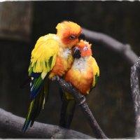 Птичья нежность :: Sofia Rakitskaia