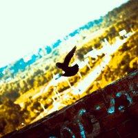 BlackBird :: Павел Дударкин