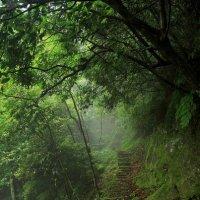 в лесу :: Наташа Мазурова