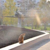 Белгород утро :: Елена Грибакина