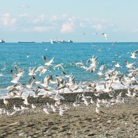 Чайки :: Вероника Бойко