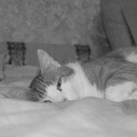 Кошачье пробуждение :: Kristina Markina