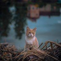 Мечты одного бездомного :: Екатерина Тумовская