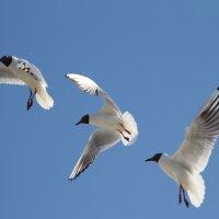 чайки :: Лидия Юсупова