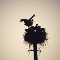 гнездо аистов :: Кристина Димитрогло