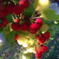 Яблочный спас :: Marina Karelina