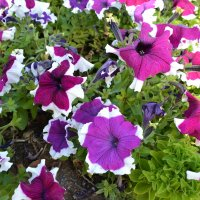 flowers :: NAZERKE OSPANOVA