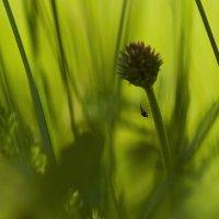 Маленькая букашка :) :: Nikolay T