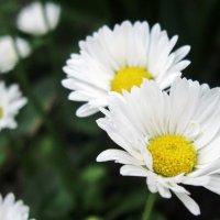 цветы :: Катя Кузьменко