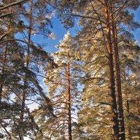 Зимний лес :: Павел Зюзин