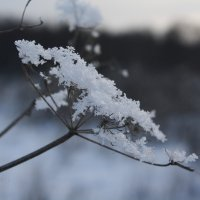 Снег :: Михаил