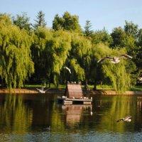 парк отдиха :: Дарина Нагорна