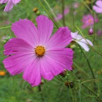 Прекрасный цветок! :: Наталья Шкуропатова
