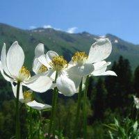 Июньские цветы :: Светлана Попова