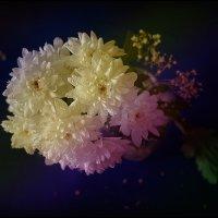 Хризантемы :: Ирина Акулова