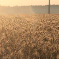 Зарево в поле :: Влад Ложкин