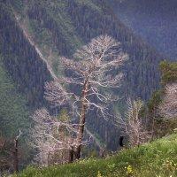 Кавказ :: Лидия Юсупова