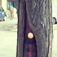 Рисунок на дереве :: Наташа Мазурова