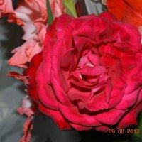 роза :: Аня Леонтьева