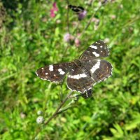 Бабочка :: Виктория Чурилова