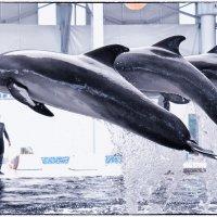 В дельфинарии :: Оксана Булгакова