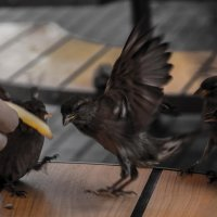 из жизни птиц  (опять) :: Андрей Желаев