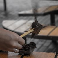 из жизни птиц :: Андрей Желаев