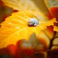 Осень :: Денис Ведь