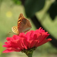на цветке :: Marina Timoveewa