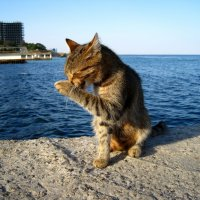 Чё то нос чешется,может рыбки дадут :) :: Slava Kappa