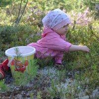 Первые ягодки :) :: Мария Савинова