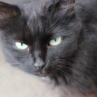 Мудрый кошачий взгляд :: Ника Камашева