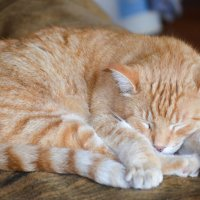 Кот спит... :: Евгений Васильев