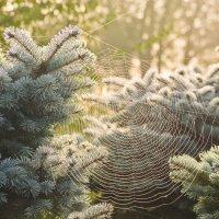 Утренняя паутинка. :: Виктор Евстратов