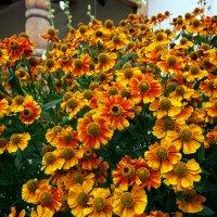 цветы :: Никита Храмцов