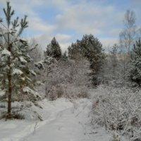 На прогулку в лес. :: Николай Масляев