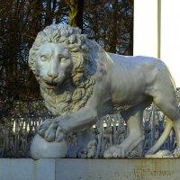 Ещё один лев!.. :: Юрий Куликов