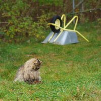 Мышья смерть. :: Kventin Natabos