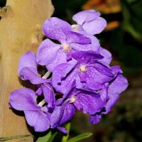 орхидеи 1 :: Alexey Bobrovskiy