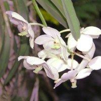 орхидея 4 :: Alexey Bobrovskiy
