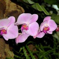 орхидея 5 :: Alexey Bobrovskiy
