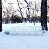 В зимнем парке :: Самохвалова Зинаида