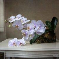 Натюрморт с орхидеей фаленопсис :: Ирина Приходько